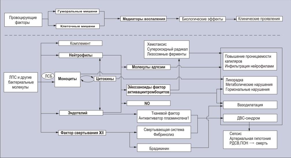 Цитруллинемия