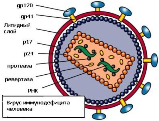 фото вирус иммунодефицита человека